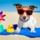 First Day of Summer and How To Protect Tech and Mobile Devices from Damage